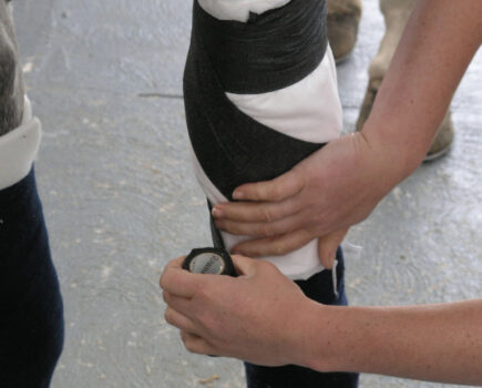 How to Bandage Your Horse's Knee and Hock