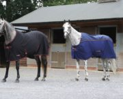 5 therapy rugs thought to help support your horse's wellbeing