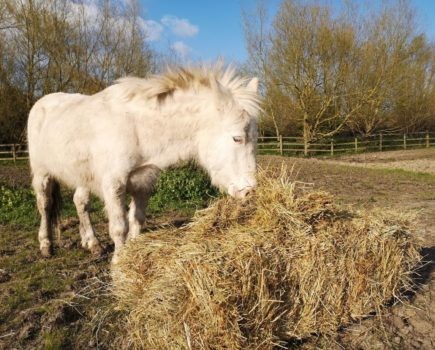 Reward offered for information about elderly rescue mule who was brutally stabbed in the face