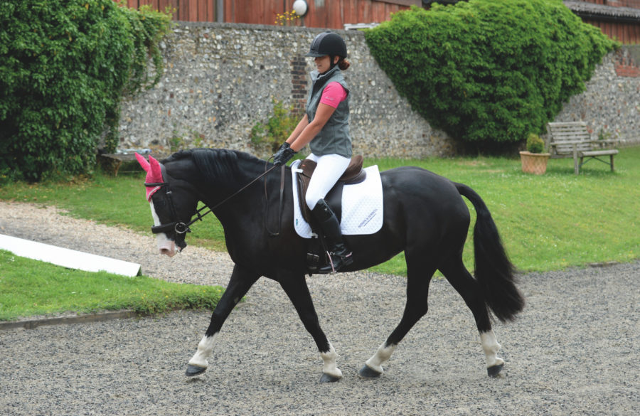 What the diagonals are and why riding on the correct one is important for keeping your horse sound