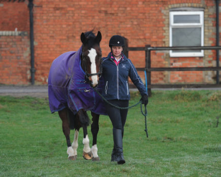 First Aid Week: What to do if your horse comes in from the field with an injury