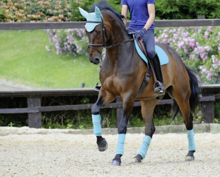 Colourful Clothing – Which Colours Will Suit Your Horse?