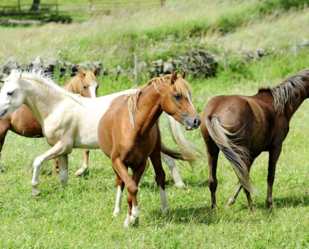 Learning Your Horse's Language