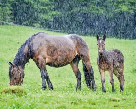 Does Your Horse Really Need a Rug When It's Wet?