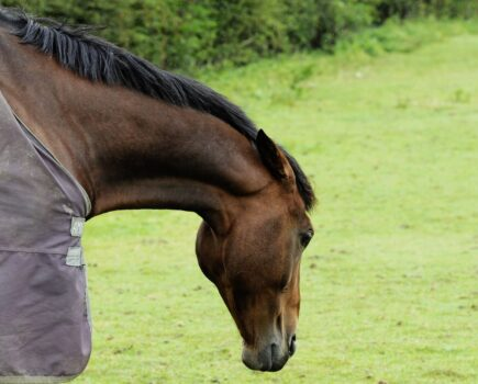 What to Do if You Think Your Horse Was Drugged at Purchase