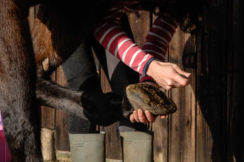 What You Need to Know Before Going Barefoot With Your Horse