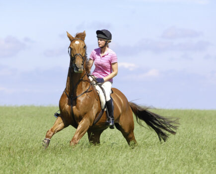Buying the Right Bit for Your Horse: Questions to Ask Before You Buy