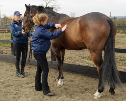 10 weight management tips for your horse
