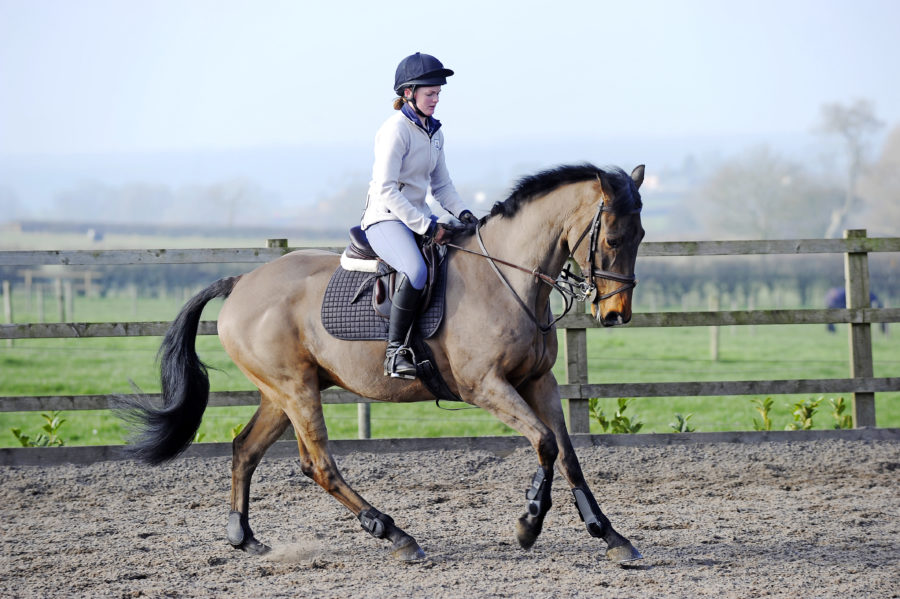 Effective ways to get your horse to burn more calories