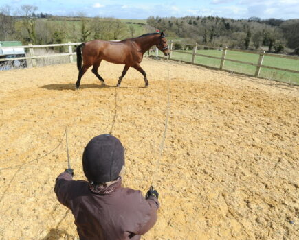 Cavesson or Bridle? How to Fit Them Both Correctly for Lungeing