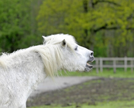 What Are the Symptoms of Choke in Horses?