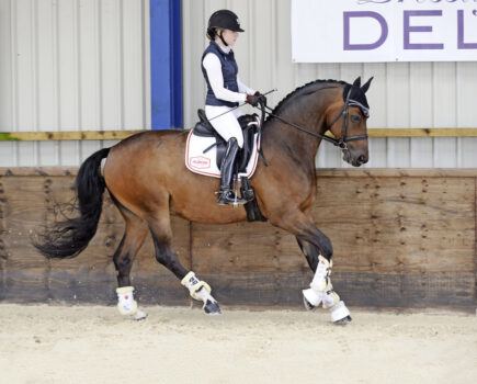 Canter Collection – Improving Your Transitions Within the Pace