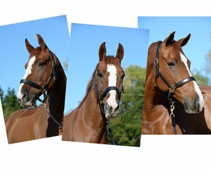 Tips for Taking a Great Headshot of Your Horse