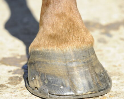 Cope With Cracked Hooves