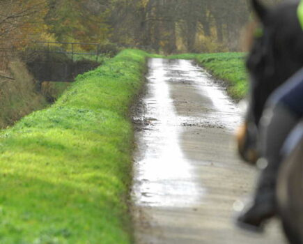Am I to Blame if My Horse Spooks on the Road and Causes an Accident?
