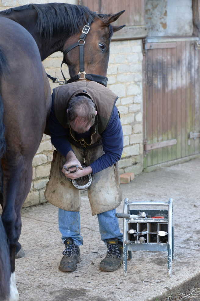 How Do I Remove My Horse's Shoe in an Emergency?