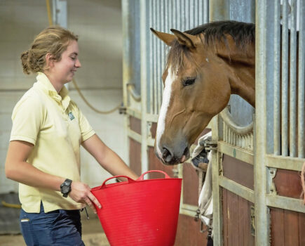 8 vet tips to get your horse to eat a feed with medication in it