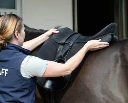 How Do I Become a Saddle Fitter?