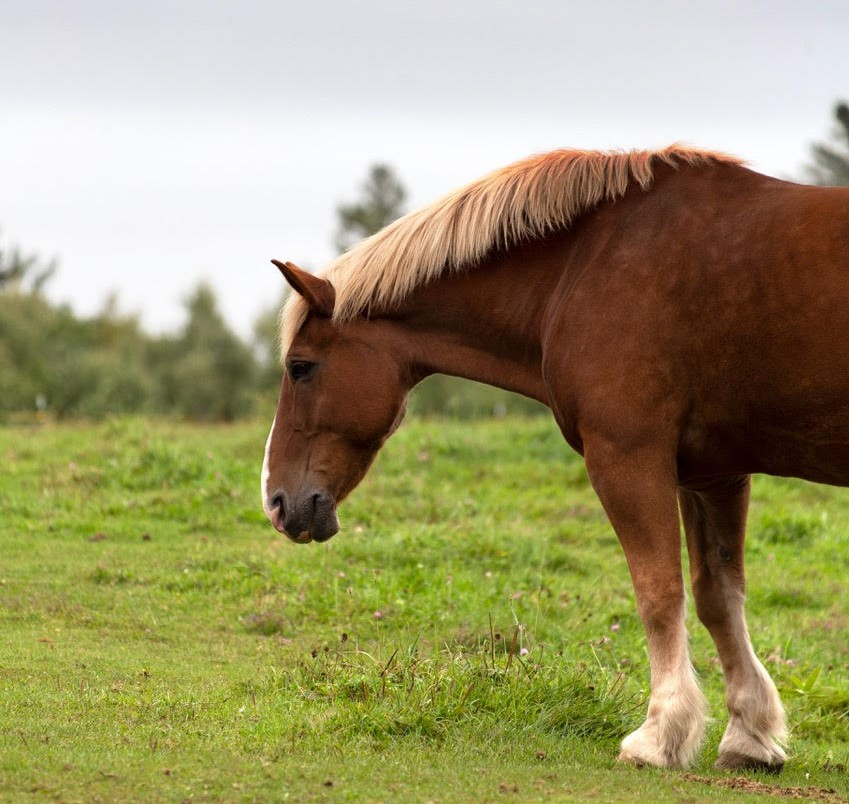 Obesity and laminitis guidelines are required in case of future lockdowns, study reveals