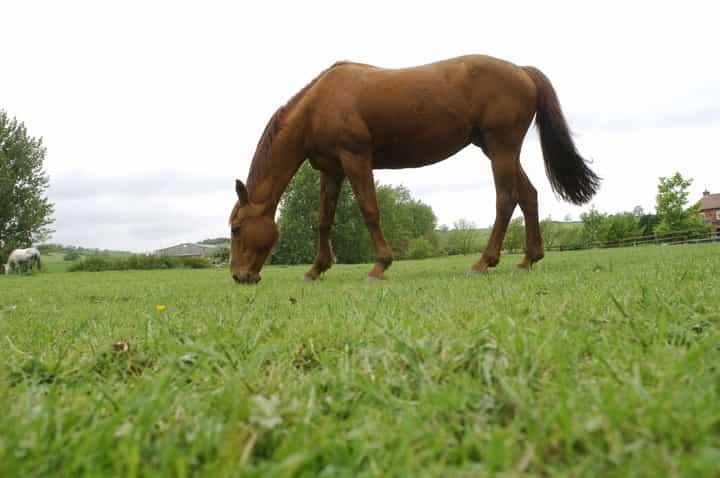 BBC Panorama documentary shines worrying light on ex-racehorses killed in abattoirs