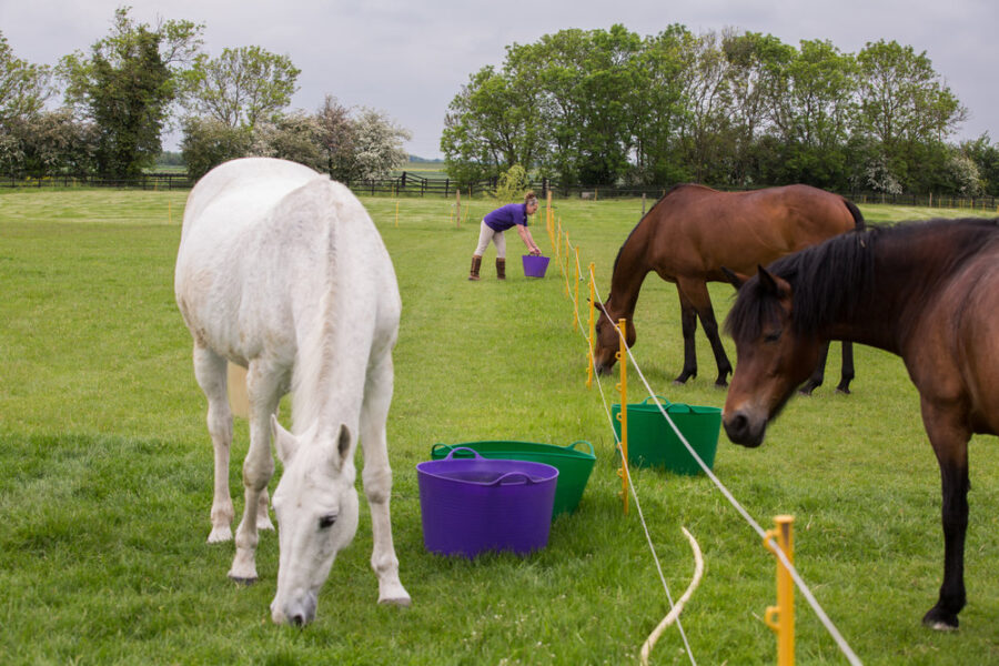 Fighting the equine obesity epidemic: Dodson & Horrell joins Your Horse's Fit Not Fat campaign