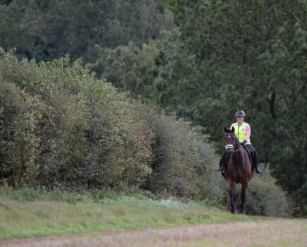 5 top tips for taking your horse on a fun ride solo