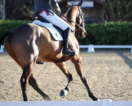 Half Pads Help Reduce Forces on Horse's Back, Study Reveals
