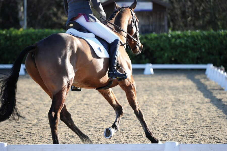 Half pads do help reduce forces on a horse's back, study reveals
