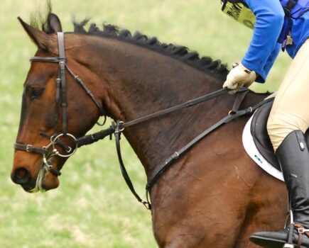 Buyer's Guide to Breastplates