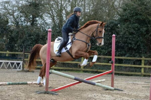 Sir  Mark Todd's simple cross-pole exercises for a quick schooling session with big benefits