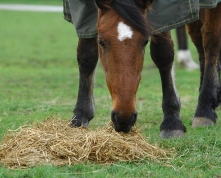 Hind gut fermenters and a 'factory' of micro-organisms: all about your horse's digestive system