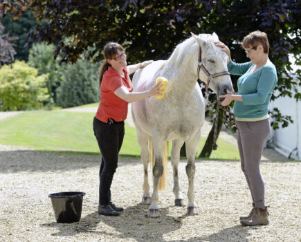 How to Wash Your Grey Horse