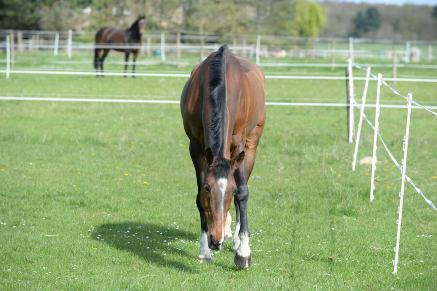 8 ways to reduce the risk of your horse or pony suffering laminitis