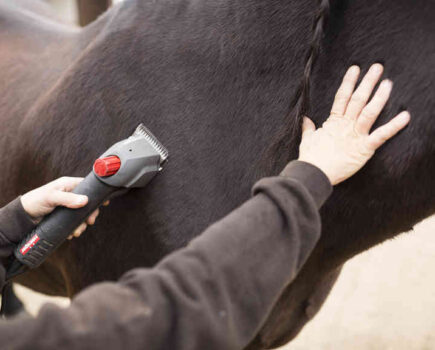 Clipping a Nervous Horse
