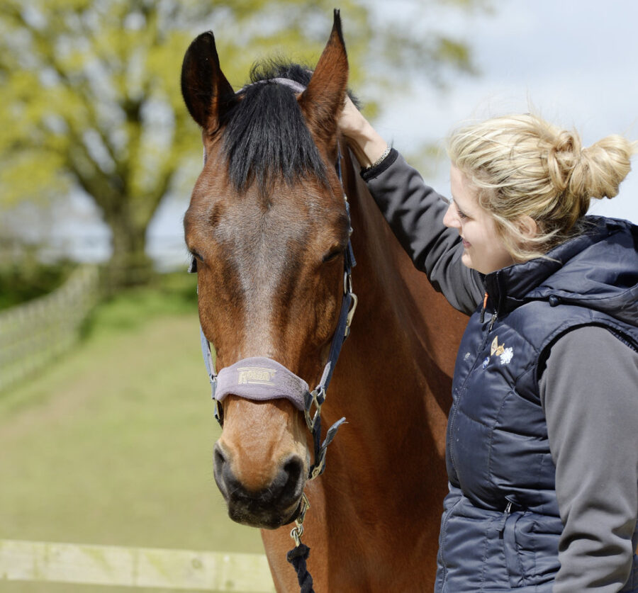 6 Ways to Reduce Stress in Your Horse