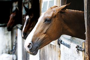 Moody Mares: Treatments and Supplements