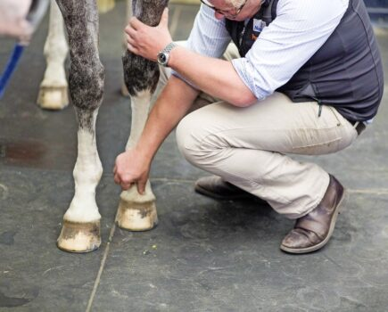 3 Signs of a Well-shod Foot