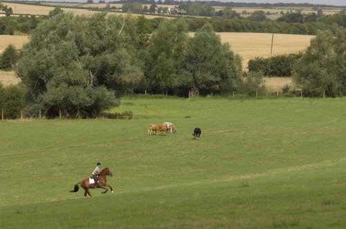 How to Use Hills to Improve Your Horse's Fitness