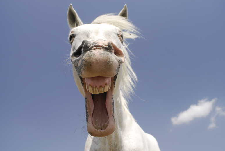 13 signs your horse is happy