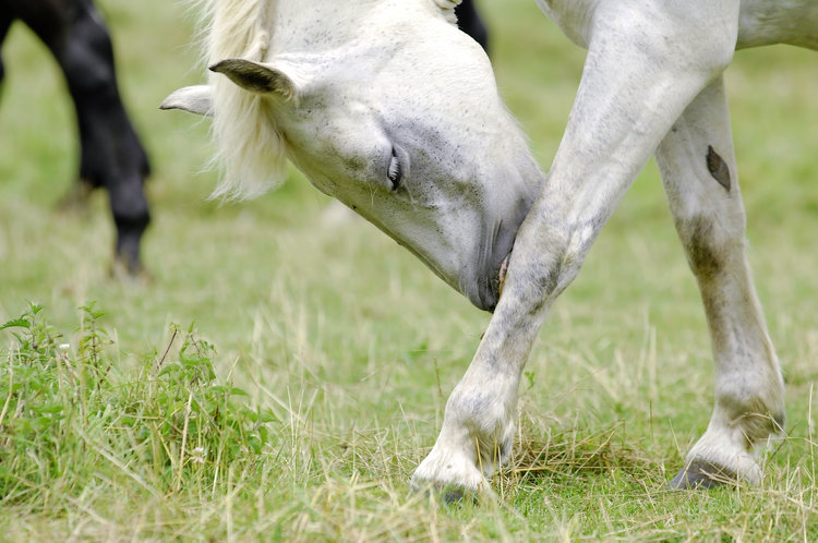 The Causes and Treatment of Allergic Reactions in Horses