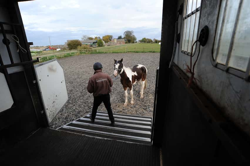 Tips for Horses Who Are Difficult to Load