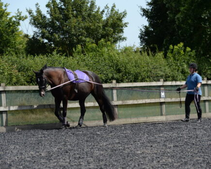 Long-reining Stages of Training