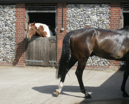 New Neighbours – 10 Ways to Make Moving to a New Yard Easy on Your Horse