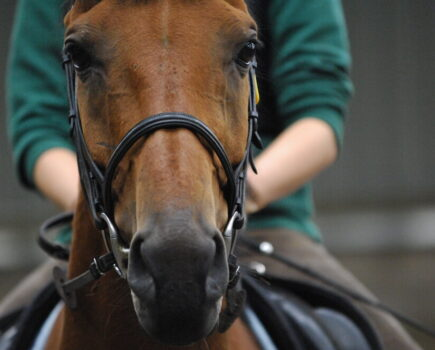 How Well Does Your Bridle Fit?