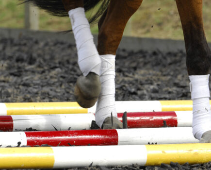 How to Stop Your Horse Tripping Over Trotting Poles
