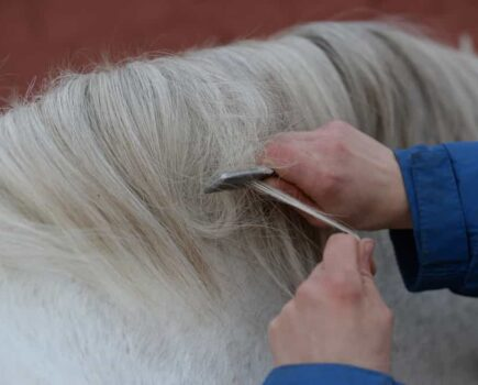 Plait Your Horse's Mane in 6 Steps