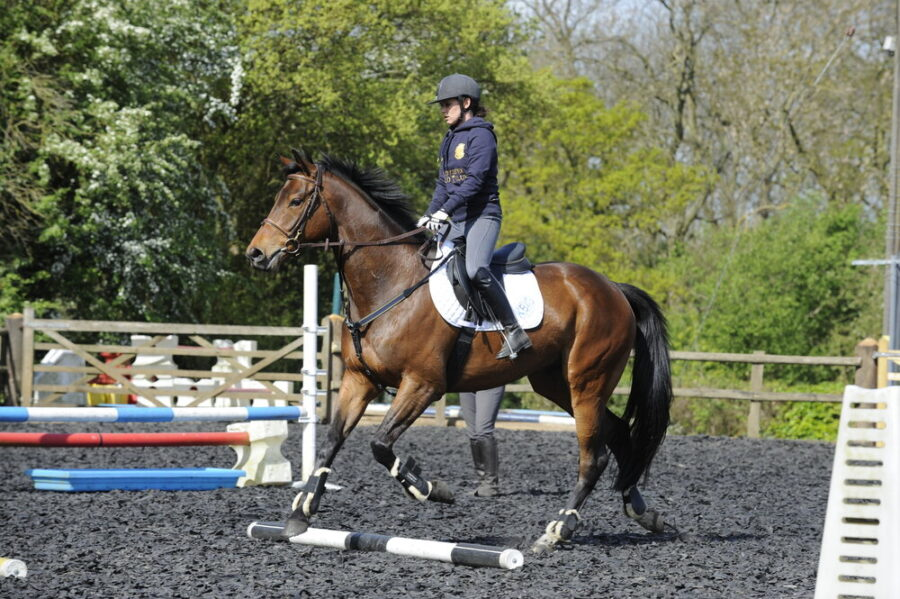 Give Your Horse a Full Body Workout