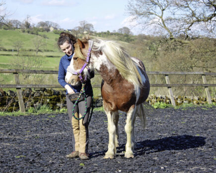 How to Introduce Your Horse to Clicker Training