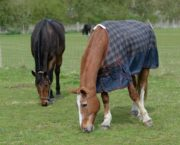 9 golden rules of rugging, plus the science behind how your horse controls his temperature