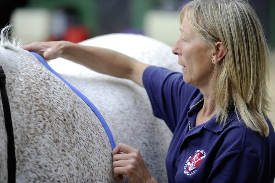 5 ways to help your horse lose weight and get him fitter and healthier